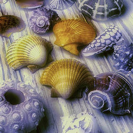 Sea Shell Arrangement  - Garry Gay
