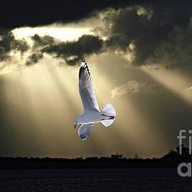 Geoff Childs - Seagull and Sunbeams. Original Exclusive Photo Art.