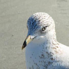 Sabrina Wheeler - Seagull Portrait