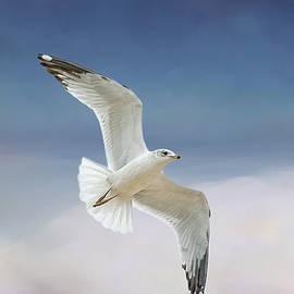 Bonnie Barry - Seagull in Flight