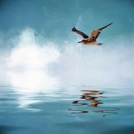 Cyndy Doty - Seagull in Flight