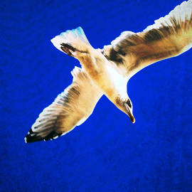 Colin Hunt - Seagull In Flight Series 2 #01