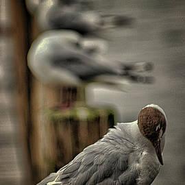 Martin Newman - Seagull lookout