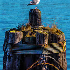 Seagull On Pilings  - Garry Gay