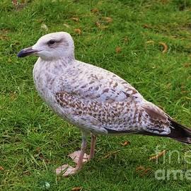 Marcus Dagan - Seagull On The Green