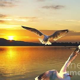 Geoff Childs - Seagulls at Sunrise... Exclusive Original stock Photo Art