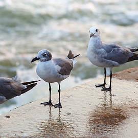 Inho Kang - Seagulls