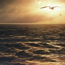 Carlos Caetano - Seagulls into the Sun