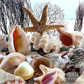 Gabriele Pomykaj - Seashell Galore