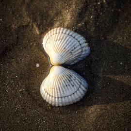 seashell - Joana Kruse