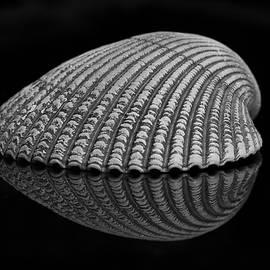Morgan Wright - Seashell Study