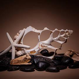 Tom Mc Nemar - Seashells on the Rocks
