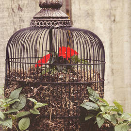 Jordan Blackstone - Secret Garden Art - You Have The Power