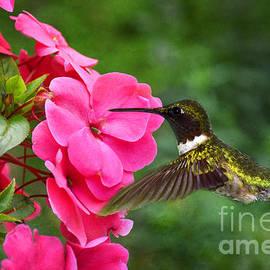 Deborah Berry - Seeking Nectar