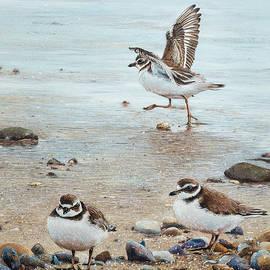 Ezartesa Art - Semipalmated Plovers Parade The Beach