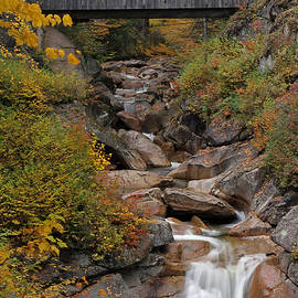 Juergen Roth - Sentinel Pine Bridge