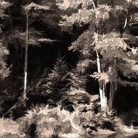 Betsy Zimmerli - Sepia Forest