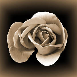 Lynn Bolt - Sepia Rose