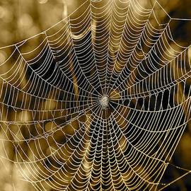 Carol Groenen - Sepia Spider Web