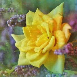 Kathy Bucari - September Rose