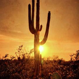 Saija Lehtonen - Serenity Sunset in the Sonoran