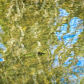 LeeAnn McLaneGoetz McLaneGoetzStudioLLCcom - Seven Ponds Nature Center Fishing