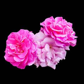 Martin Wall - Shades of Pink
