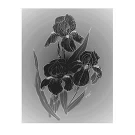 Jacquie King - Shadow Iris