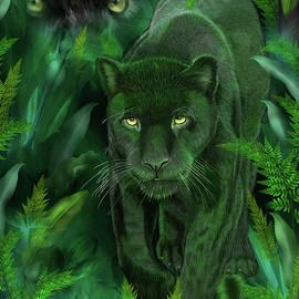 Carol Cavalaris - Shadow Of The Panther