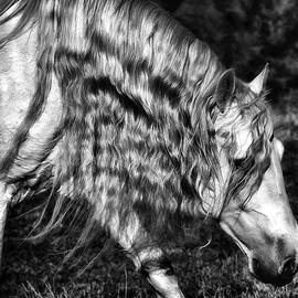 Wes and Dotty Weber - Shadowland Stallion D1701