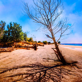 Debra and Dave Vanderlaan - Shadows in the Sand
