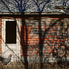 Nikolyn McDonald - Shadows - Old Farmhouse - Hen