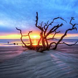 Debra and Dave Vanderlaan - Shadows on Driftwood Beach