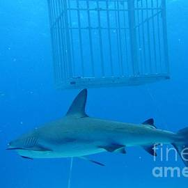 Sharks and Cage