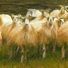 Caito Junqueira - Sheep at Hadrian