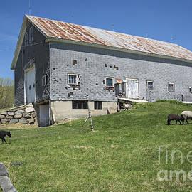 Alana Ranney - Sheep Farm