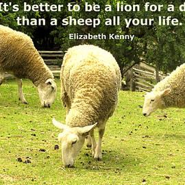 Sheep For Life