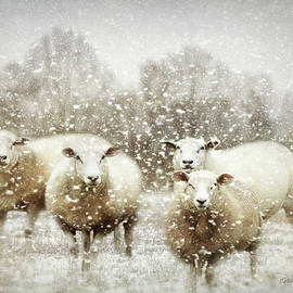 Bellesouth Studio - Sheep Gathering In Snow