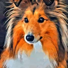 Scott Wallace - Shetland Sheepdog Portrait