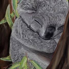 Kelly Mills - Shhhhh Koala Bear Sleeping
