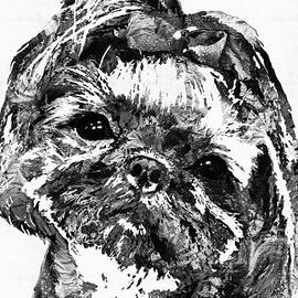 Sharon Cummings - Shih Tzu Dog Art In Black And White by Sharon Cummings