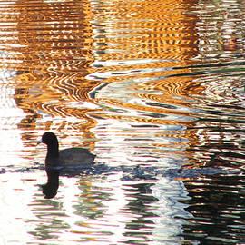 Sharon Nelson-Bianco - Shimmering Golden Pond