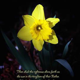 Debbie Nobile - Shining Daffodil