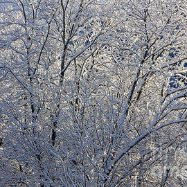 Sverre Andreas Fekjan - Shining with snow