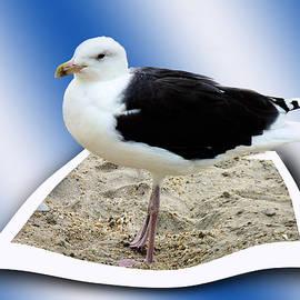 Eleanor Bortnick - Shore Bird OOB