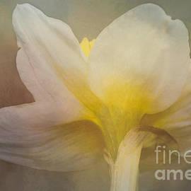 Arlene Carmel - Shy Blossom