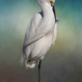 Kim Hojnacki - Shy Egret