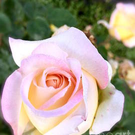 Wonju Hulse - Shy pink