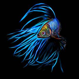 Larry Espinoza - Siamese Fighting Fish