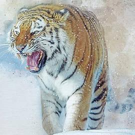 Brian Tarr - Siberian Tiger in snow